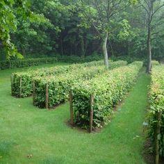 hagen - Chris Ghyselen - tuinarchitect