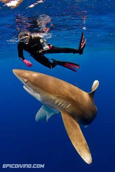 Jamie Pollack diving with sharks