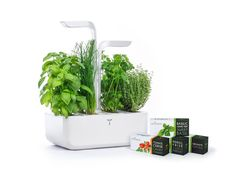 No green thumb? No problem. Even in the winter this self-sufficient indoor garden provides the freshest rosemary, basil, and any other herbs your kitchen. Organic Soil, Organic Seeds, Edible Plants, Edible Flowers, Led Horticole, Types Of Basil, Vegetables For Babies, Pbs Food, Garden Works