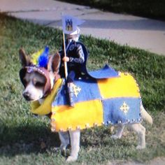 BEST Halloween dog costume ever!!