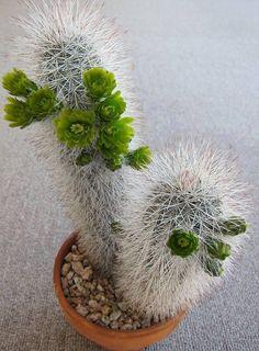World of Garden Beys Planting Flowers, Pretty Plants, Plants, Cacti And Succulents, Cactus Plants, Trees To Plant, Flowers, Desert Plants, Planting Succulents