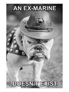 """In 1922 A bulldog was inducted into the United States Marine Corps by General Smedley Butler as a result of the Germans of WWI giving the Marines the name """"Teufel-Hunden"""" or Devil Dogs. The dog was pr Marine Quotes, Usmc Quotes, Qoutes, Life Quotes, Marine Corps Humor, Us Marine Corps, Marine Recon, Once A Marine, Marine Mom"""