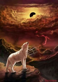 Yup, I'm not dead yet XD Long time no see! Now have some Snow Witch The Hell I Gave Birth To Wolf Images, Wolf Pictures, Beautiful Wolves, Animals Beautiful, Wolf Craft, Strongest Animal, Wolves And Women, Werewolf Art, Wolf Wallpaper