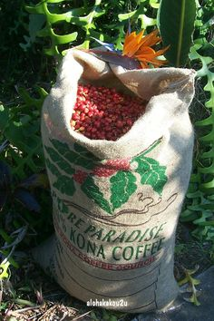 KONA coffee - my favorite in the whole wide world.
