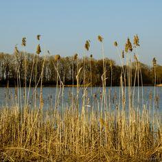 Rybník / pond Nature Photos, Pond, Vineyard, Outdoor, Outdoors, Water Pond, Vine Yard, Vineyard Vines, Outdoor Games