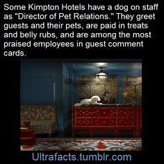Why i'm going to try to book a stay at a Klimpton hotel next time I'm out of town