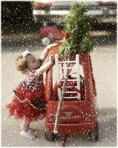 Suzy Homefaker: Glamkids Christmas Tree Shopping