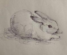 実家のウサギ。