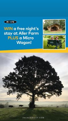 Want to find out how you can WIN a glamping trip? Iconic brand Microscooters are giving away a free night's stay in a luxury lodge, along with one of their micro wagons too! #glamping #microscooters #devon #northdevon #walkerswelcome #familyfriendly