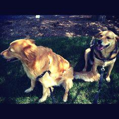 #dogs #dogwalker taking a break in the shade.