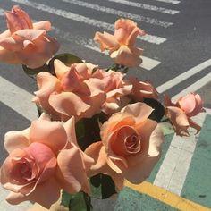 flowers, rose, and peach image Peach Aesthetic, Flower Aesthetic, Aesthetic Pics, My Flower, Beautiful Flowers, Prettiest Flowers, Flower Art, Jandy Nelson, Plants Are Friends