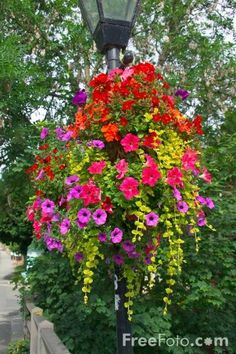 While once restricted to the porch or patio, planters have extended their reach. The popularity of container landscaping is growing as people realize the flexibility this attractive design can provide. If you are looking to revamp your yard, exploring. Container Flowers, Container Plants, Container Gardening, Hanging Flower Baskets, Hanging Planters, Dream Garden, Garden Pots, Garden Inspiration, Beautiful Gardens