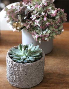 Urban Jungle Bloggers | Plants & Flowers