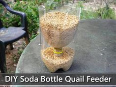 Use a plastic bottle to feed your quail, chickens or other small fowl! Cut a large plastic bottle in half and cut holes on either side of the bottle in half-moon shapes. Set the top of the bottle upsi Quail Pen, Quail Coop, Raising Quail, Raising Chickens, Backyard Chicken Coops, Chickens Backyard, Backyard Coop, Quail House, Button Quail