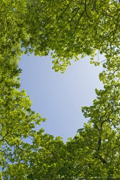 Image detail for -Heart shaped against sky through beech tree