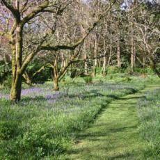 A mown path trough an orchard near Baltimore in West Cork, Ireland.