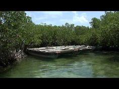 isla saona republica dominicana fotos - Buscar con Google