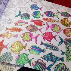 Using back Colleen neon color pencils. Their colors really gorgeous. #lostocean #adultcoloringbook #johannabasford
