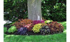 Clique Arquitetura - Seu portal de Ideias e Soluções - Coléus: folhagens coloridas para o jardim