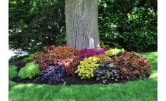 Landscaping Around Trees . Landscaping Around Trees . Multicolored Coleus Shade Friendly for when We Finally Landscaping Around Trees, Cheap Landscaping Ideas, Outdoor Landscaping, Front Yard Landscaping, Outdoor Gardens, Succulent Landscaping, Backyard Ideas, Shade Landscaping, Patio Ideas