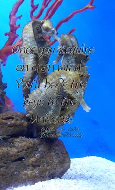Always have an #openmind #fridayquote #seahorses #pretty