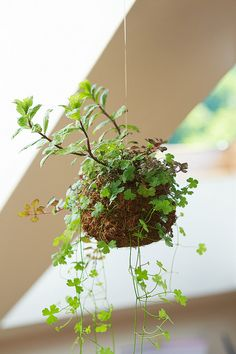 Kokedama | Flickr - Photo Sharing!