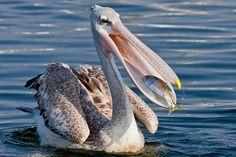 弱肉強食そのもの、野生動物が獲物を捉えた瞬間の写真15枚 - DNA