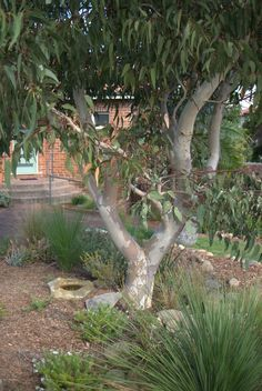 Mallee Design native Australian garden design. Servicing North Shore Eastern suburbs Marrickville Dulwich Hill Balmain Maroubra Sydney Wollongong Sutherland Shire Illawarra. Native plant specialist and horticulturist. Sustainable gardens, conservation and land management.