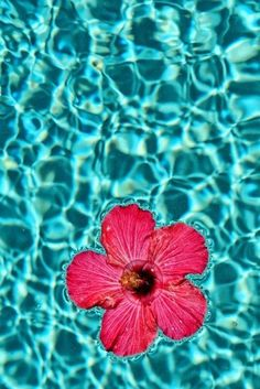 Hibiscus Floating on Turquoise Sea Iphone Wallpaper Ocean, Summer Wallpaper, Aesthetic Iphone Wallpaper, Aesthetic Wallpapers, Cute Wallpaper Backgrounds, Pretty Wallpapers, Flower Wallpaper, Nature Wallpaper, Tropical Vibes