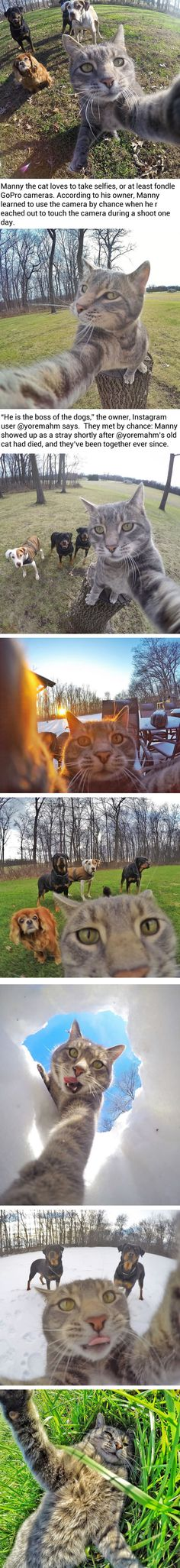 Manny The Selfie Taking Cat Takes Better Selfies Than You (via @yoremahm) - 9GAG