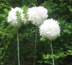 71 best allium images on pinterest allium allium flowers and 5 pom pom flower ready to ship giant allium dandelion wishie mightylinksfo