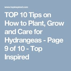 TOP 10 Tips on How to Plant, Grow and Care for Hydrangeas - Page 9 of 10 - Top Inspired