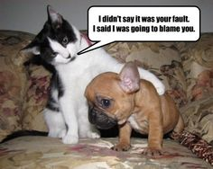 That's the Way the Cat and Dog thing Works, Pup