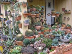 This is what I want my deck to look like! Succulent Arrangements, Cacti And Succulents, Planting Succulents, Planting Flowers, Dry Garden, Garden Plants, Indoor Plants, Cactus Planta, Cactus Y Suculentas