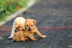 Playmate   Flickr - Photo Sharing!