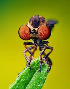 a fly