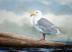Seagull by James Williamson - Seagull Painting - Seagull Fine Art Prints and Posters for Sale