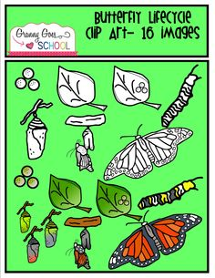 Butterfly Life Cycle Clip Art