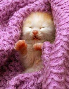 Little Sleepy Kitten can't wait for kittens in my house Cute Kittens, Cats And Kittens, Ragdoll Kittens, Bengal Cats, Kitty Cats, Beautiful Cats, Animals Beautiful, Cute Baby Animals, Funny Animals