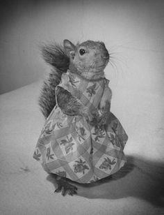 A Squirrel's Guide to Fashion | LIFE.com