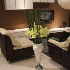 Schöne Zimmerpflanzen erfüllen die Rolle von Dekoration