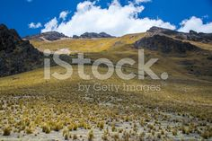 vegetation in the Andes, Peru royalty-free stock photo