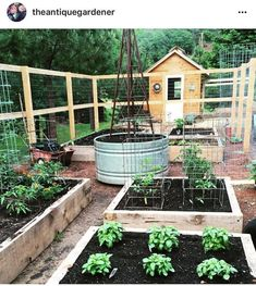 I Love Love Raised Bed Garden And Chicken Coop. I Love The Pecky Cedar  Boards She Used To Make Her Raised Beds.   Gardening Take