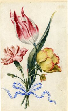 Drawing from an album, white and crimson Tulip, Pink, and yellow and red Ranunculus, tied with blue ribbon Watercolour over metalpoint, shaded with grey wash, on vellum by Alexander Marshall. British, date 1639-1682.
