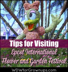 Tips For Visiting the Epcot International Flower and Garden Festival