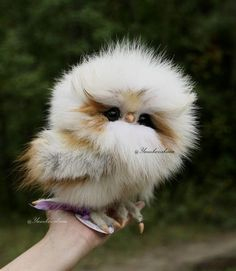 16 Adorable and Ultra Fluffy Animals Will Melt Your Heart - I Can Has Cheezburger? and pets 16 Adorable and Ultra Fluffy Animals Will Melt Your Heart Owl Pictures, Baby Animals Pictures, Cute Animal Pictures, Funny Pictures, Hair Pictures, Funny Owls, Cute Funny Animals, Cute Dogs, Silly Dogs