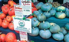 Grain-free pumpkin recipes!