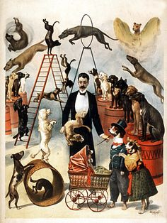 Trained Dog Circus - Vintage Retro Show Poster for Sale – Such A Poster Old Circus, Vintage Circus Posters, Vintage Advertising Posters, Retro Poster, Circus Art, Vintage Carnival, Poster S, Circus Theme, Vintage Travel Posters