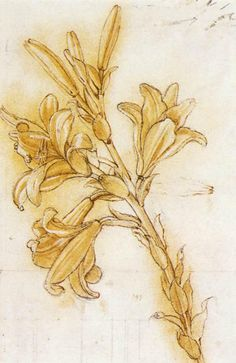 Leonardo da Vinci (Italian, Florentine; Early Renaissance, 1452-1519): Lily, c. 1475. Pen and ink and ochre wash with white heightening over black chalk, the outlines pricked; 31.4 x 17.7 cm. Royal Collection, Windsor Castle, Windsor, UK.