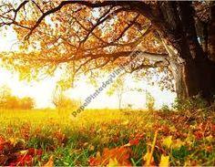 Resultado de imagen para naturaleza en otoño